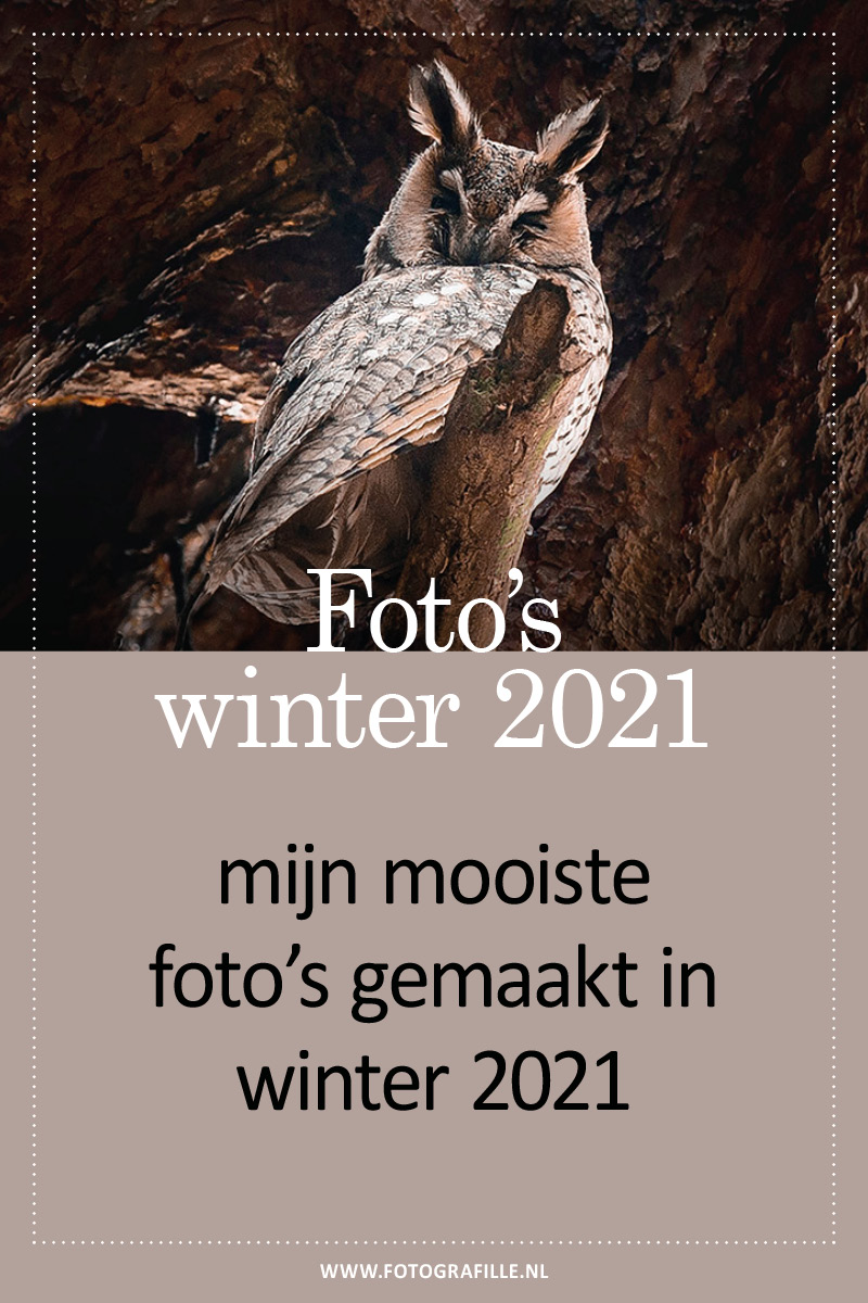 fotograferen in de winter