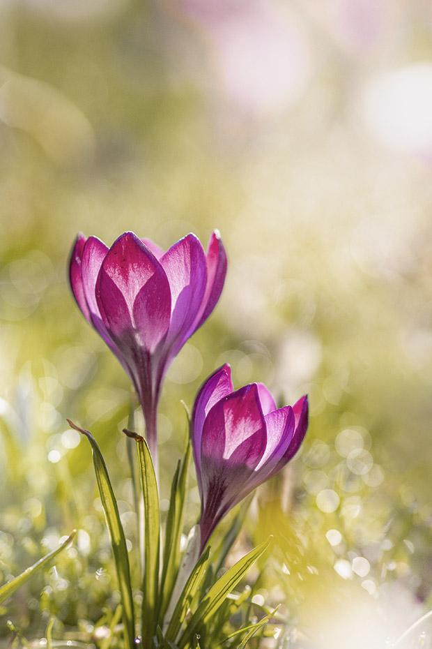 bloemen bewerken in photoshop